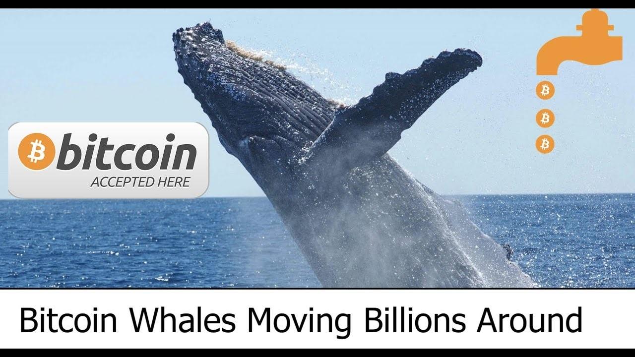 منصة Whales Trader